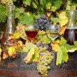 Red and white wine autumn scene - Foto de Stock  