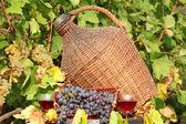 Red wine autumn scene — Stock Photo