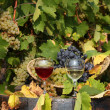 Vineyard with red and white wine - Stockfoto