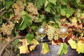 Scène automne blanche de raisin et du vin — Photo