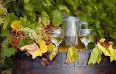 Vineyard white wine — Stock Photo