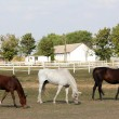 Horse farm — Stock Photo #7185629