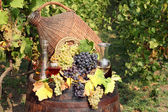 Vineyard with grape and wine — Stockfoto