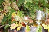 White grape and wine — Stock Photo