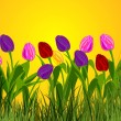 Bunch of tulips — Stock Photo #6851386