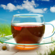 Tea cup — Stock Photo