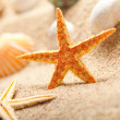 Stock Photo: Starfish and sea shells on sand