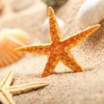 Starfish and sea shells on sand — Stock Photo #7635869