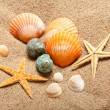 Stock Photo: Sea life - shells and starfish