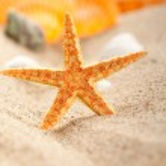 Starfish and shells on sand — Stock Photo