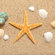 Shells and starfish — Stock Photo