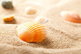 Shell on sand — Stock Photo