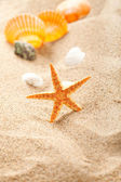 Starfish and shells on sand — Stock Photo