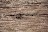 Timber Texture — Stock Photo