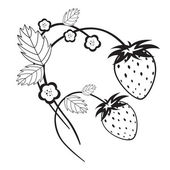 Monochrome strawberries with blossom — Stock Vector