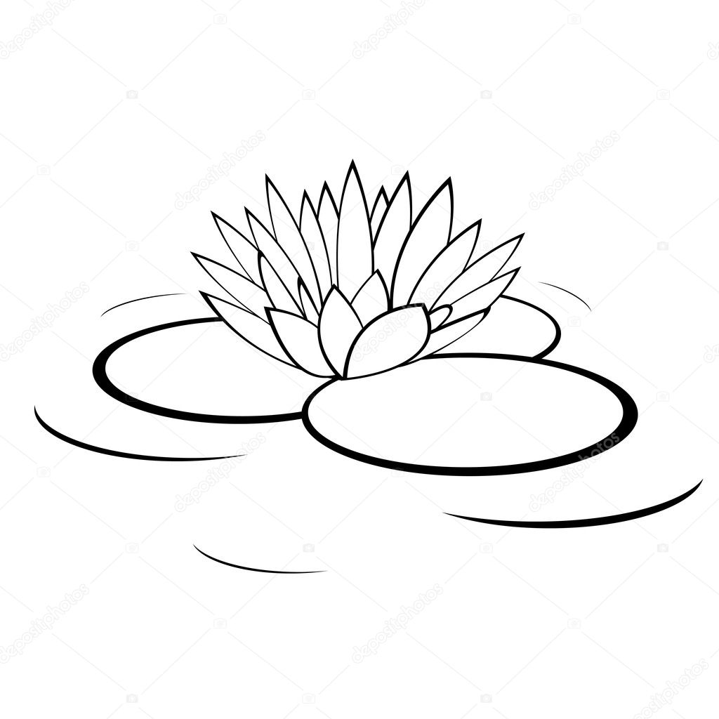 Lily Plant Drawing Water Lily Flower — Vector