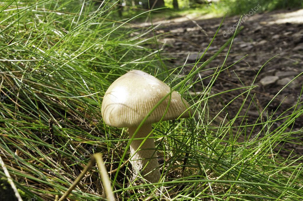 The mushroom among grass — Stock Photo #7845442