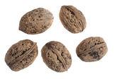 Five major goals walnuts — Stock Photo