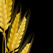 Wheat on black background — Stock Vector