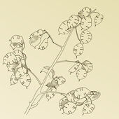Hand drawn herb — Stok Vektör