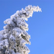 Winter mountain tree — Stock Photo