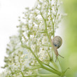 Snail on white flower — Stock Photo #7516172