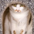 Lovely cat portrait in cat's house — Stock Photo