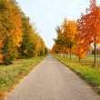 Stock Photo: Bicycle road leads across autumn trees