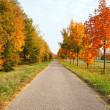 Bicycle road leads across autumn trees — Stock Photo #7437913