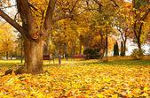 Beautiful autumn park in a rainy day — Stock Photo