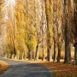 Stock Photo: Old road leads across autumn poplar lined