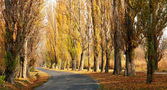 Old road leads across the autumn poplar lined — Stock Photo