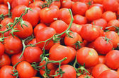 Close up of tomatoes — Stock Photo