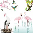 Stock Vector: Vector illustration with birds and flowers