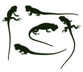 Set of silhouettes iguana — Stock Vector