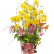 The daffodils in a ceramic pot — Stock Photo
