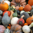 Pumpkins and gourds — Stock Photo #7091040