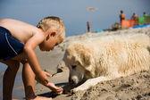 Junge spielt mit hund am strand — Stockfoto