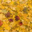 Yellow and red leaves background — Stock Photo