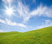 Green grass with yellow dandelion flowers against blue sky — Stock Photo