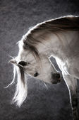 White horse on the dark background — Stock Photo