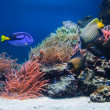 Underwater life, Fish, coral reef — Foto Stock