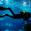 Diving in the ocean underwater - Stock Photo