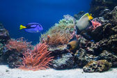 Underwater life, Fish, coral reef — Stock Photo