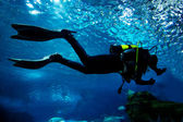 Diving in the ocean underwater — Stock Photo