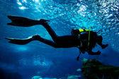 Diving in the ocean underwater — Stockfoto