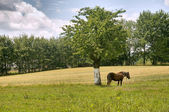 Village landscape — Stock Photo
