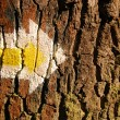 Yellow arrow on tree — Stok fotoğraf
