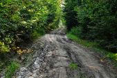 Forestry road in autumn — Stock Photo