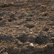 Fragment of field with plowed soil — Stock Photo
